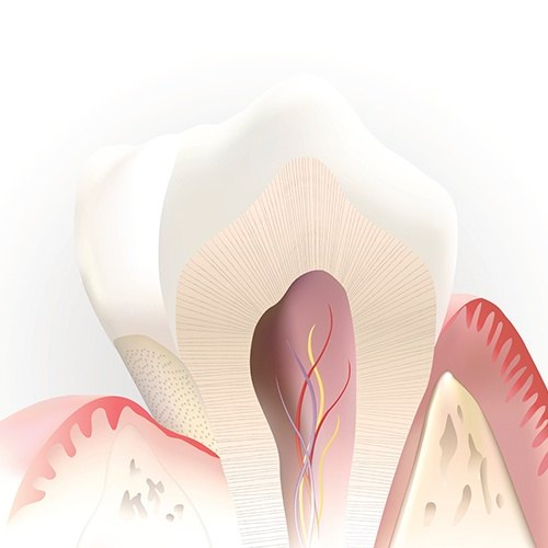 computer illustration of inside tooth